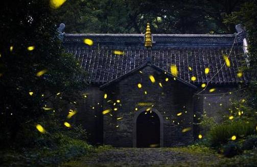 网络配图 6月29日,萤火虫在南京灵谷寺景区的树林中飞舞。盛夏时节,在南京灵谷寺景区,成群的萤火虫在树林中穿梭飞舞,星星点点的亮光宛如夜空中的繁星,成为夏夜里一道柔美的风景线。